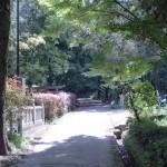 神谷神社本殿右側の林道