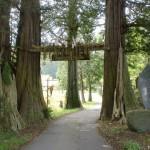 仲仙寺の杉の木の門