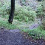 へびん湯の手前の小道