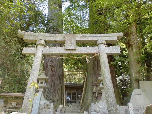 熊野神社の二本杉(県道263号線沿い・香川県)の画像