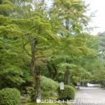 紅葉谷公園(岩国城山裾)