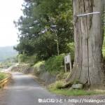 春日神社の大杉前の車道(岩国市)