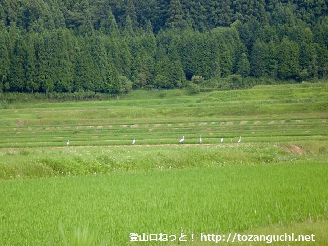 八代のナベツル飛来地にある野鳥観測所からみる野鳥