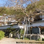 香下寺(摂津国三十三箇所第十一番霊場)