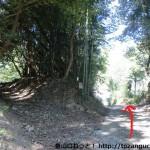 大船山の登山口に行く林道の入口手前の分岐地点