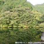 県道31号線から花尾山登山口に行く途中の林道沿いにあるダム