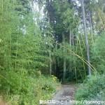 鴻応山の牧登山口手前の竹林の林道
