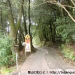 金竜寺跡に行く途中の林道