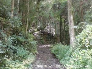 葦谷林道の始点