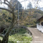 金熊寺本堂左手にある梅林から四石山へ向かう道