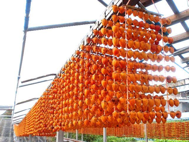 串柿の玉のれん