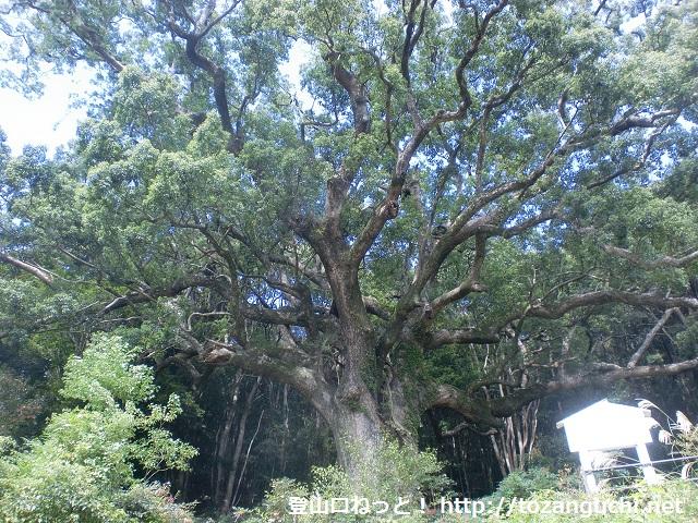 飯盛山・長者ヶ峰の登山口 なかつ平成の森にアクセスする方法