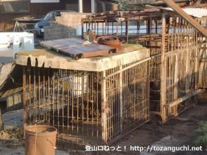 JR笠田駅前のイノシシ生け捕り手づかみイノシシ肉直売所で捕まえられているイノシシ