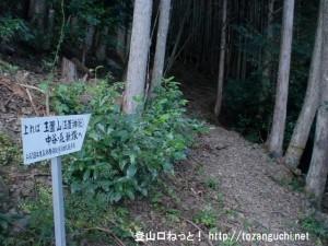 折立の玉置山(玉置神社)登山口から見る登山道