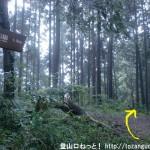 広徳寺から今熊神社に行く途中の分岐3