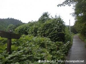 あきる野市の金比羅山の登山道(林道)の入口に入ったところ