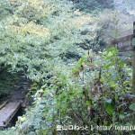 大岳鍾乳洞の上にある大滝と馬頭刈尾根への登山道の入口