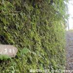 十里木の戸倉城山(城山)登山口の道標