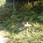 小下沢林道の狐塚峠への登り口