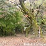 慈恩寺の惣岳山(高水三山)登山口