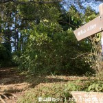 陣馬山の一ノ尾根入口から見る陣馬山への登山道