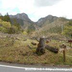 二子山の西峰とローソク岩分岐を経由するコースの登山道入口から見る二子山の登山道