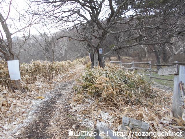 新坂平の鈴ヶ岳登山口から見る登山道
