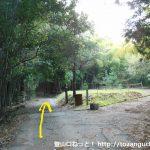 大洞池に行く途中の林道の分岐