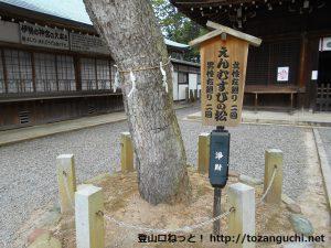 """大宮浅間神社の本殿前""""縁結びの松"""""""