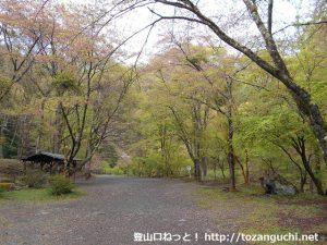 竜神の滝キャンプ場(群馬県上野村)