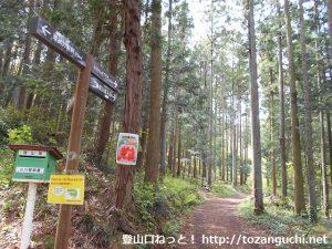 金勝山の東登山口から見るハイキングコースのトレイル