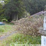 高山不動(関八州見晴台)のパノラマコース登山口に設置されている道標