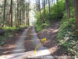 ユガテ入口前の林道