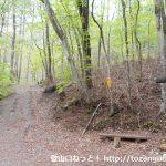 川浦林道の雨坊主山の登山口から見る登山道の入口