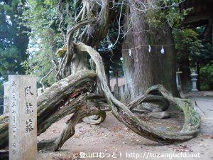 千磐神社の臥龍藤