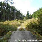 千年樹の森に向かう林道