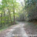 林道のように荒れている県道157号線