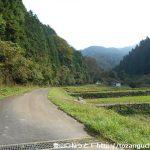 ノウミ谷への林道