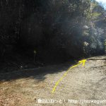 桑谷山の北側の林道の終点手前の舗装路が終わるところ