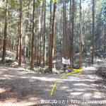 桑谷山の桑谷キャンプ場側の登山コース入口前の分岐