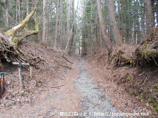 杓子山・立ノ塚峠に向かう登山道