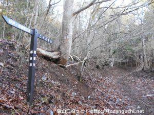 戸沢地区の二十六夜山登山口から見る登山道