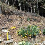 笹子雁ヶ腹摺山の登山口前の墓地の階段の一番上から雁ヶ腹摺山の登山コースに入る