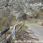 鼓川温泉の先にある妙見山・小楢山への登山コースの入口
