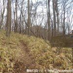 信州峠から横尾山に向かう登山コースに入る