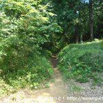 露垂根神社の本殿左手から唐沢山のハイキングコースに入るところ